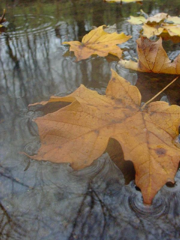 leaves reflected.jpg